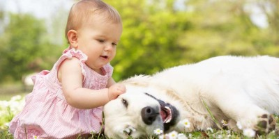 Dogs and Babies: Making the Adjustment